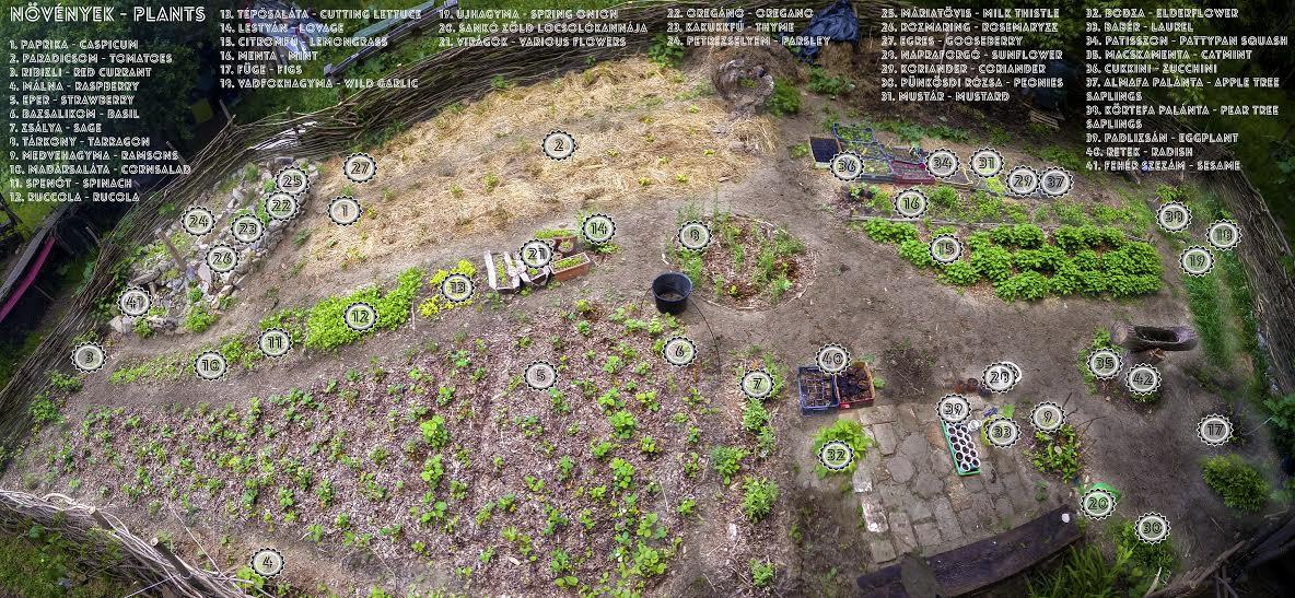 sun-community-garden