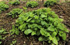 bio-herb-garden